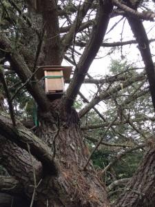 tree nuc